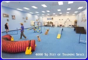 az-dog-sports-dog-training-phoenix-az-gym